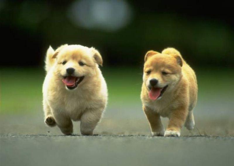 Tips Merawat Anak Anjing Tanpa Induk