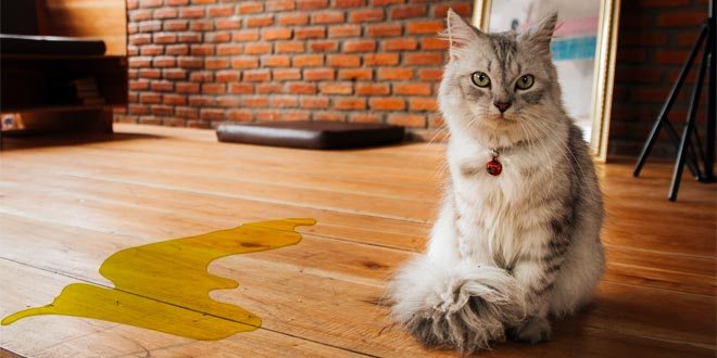 Jika Kucing Anda Buang Air Kecil Berdarah
