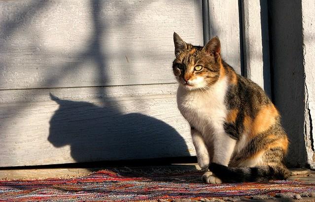Cermati Perilaku Abnormal pada Kucing