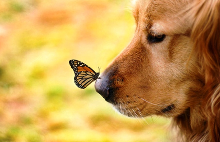 Perhatikan, Di Balik Tajamnya Indera Penciuman Anjing