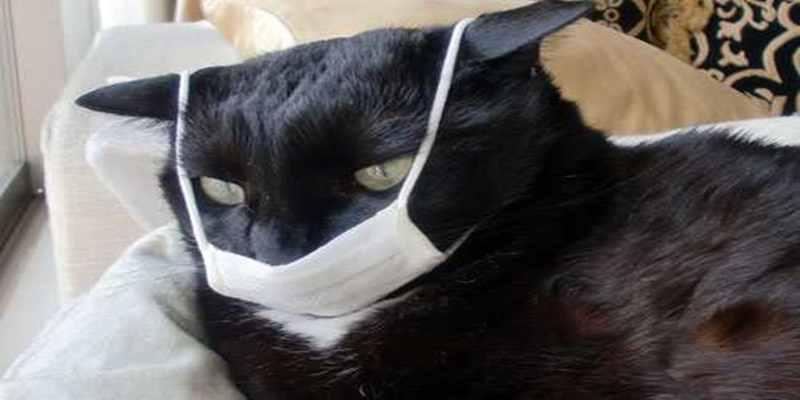 Flu Kucing yang Sering Menyerang Hewan Kesayangan