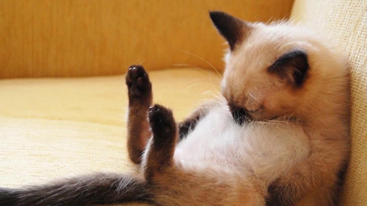Rahasia di Balik Dengkur Kucing