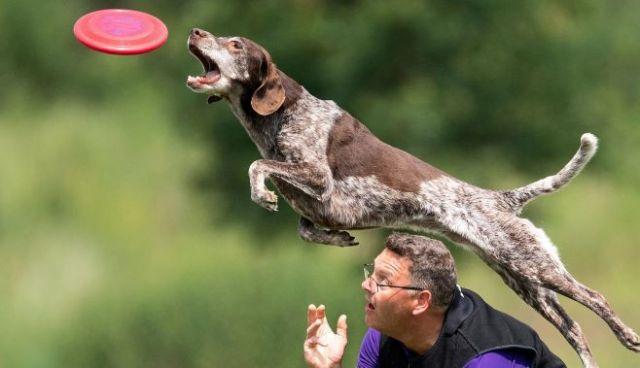 Yuk, Latih Anjing Peliharaan Anda Melompat
