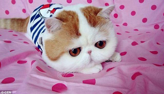 Jika Kucing Bersolek