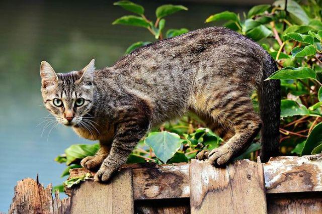 Kucing Selalu Menoleh Kalau Dipanggil Pus