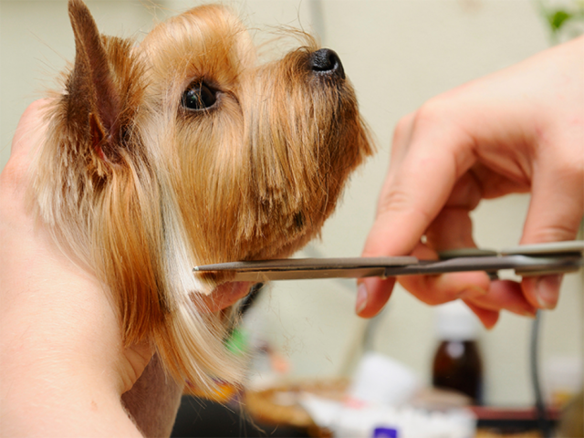 Anjing Perlu Rutin Grooming