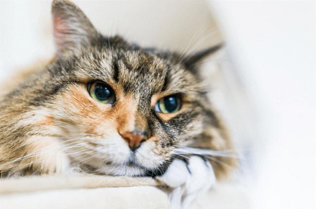 10 Cara Obati Sakit Mata Pada Kucing