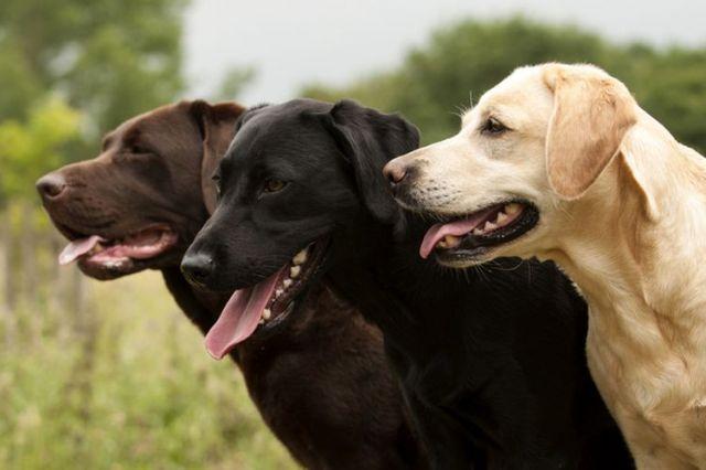 Mengenal Jenia Anjing Pemburu