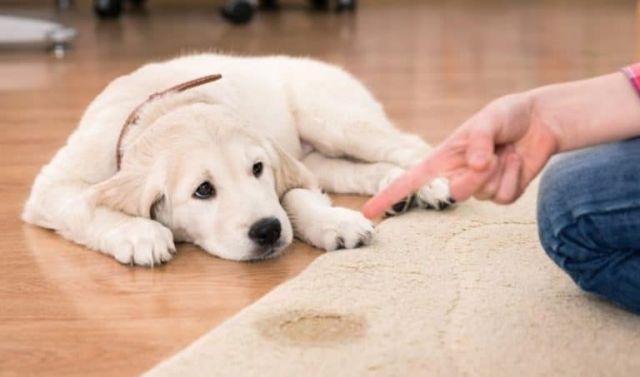 Jaga Kebersihan Rumah Bersama Anjing Kucing Selama Pandemi Covid-19
