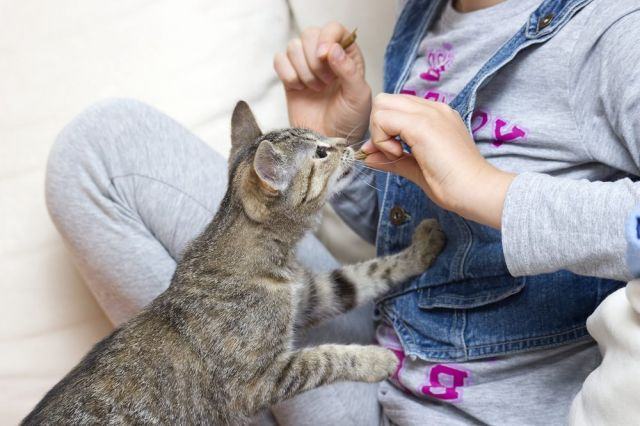 Jika Tiba-Tiba Kucing Anda Agresif
