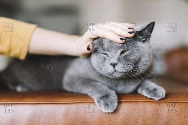 Yang Tidak Boleh Dilakukan Jika Anda Takut Pada Kucing