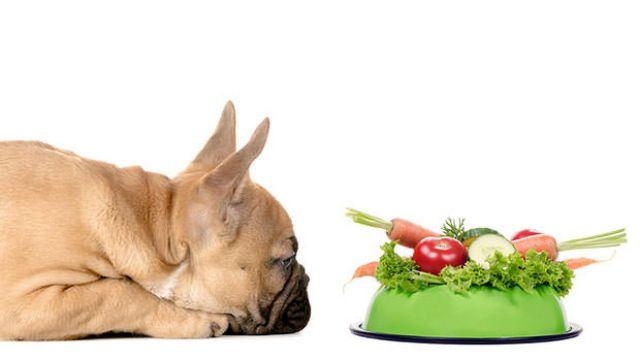 Memilih Makanan Anjing Ternyata Tak Bisa Sembarangan