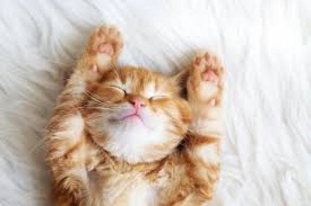 Jika Kucing Anda Terkena Penyakit Pernafasan