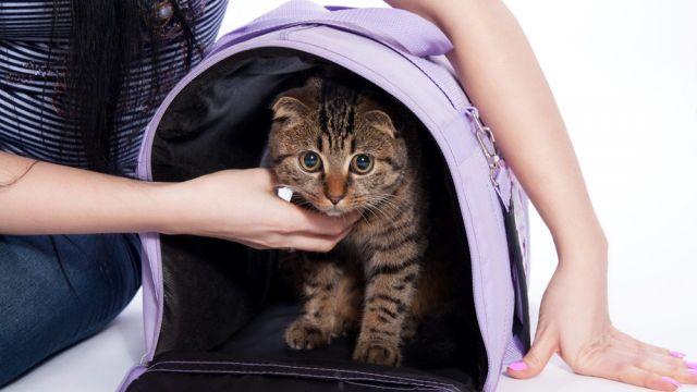 Tips Membawa Kucing ke Dokter
