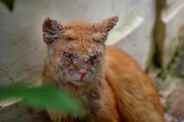 Tips Mengobati Scabies Mulut Pada Kucing
