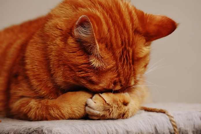 Kutu Kucing, Basmi dengan Cara Ini
