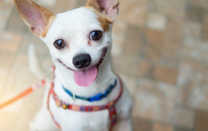 Kepercayaan di Balik Perubahan Warna Bulu Anjing