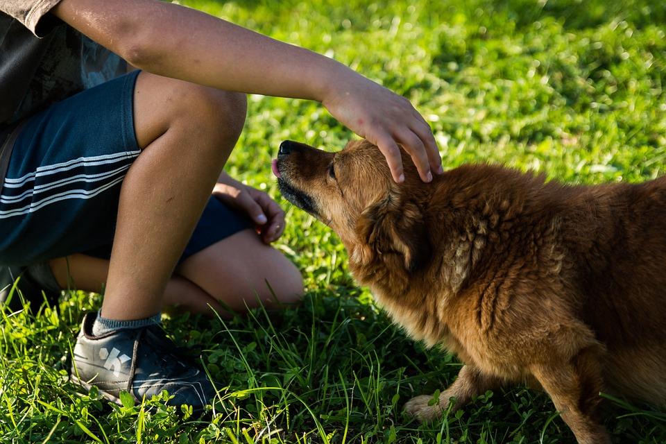 Pemilik Sering Salah Mengartikan Sikap Anjing, Ini Yang Terjadi