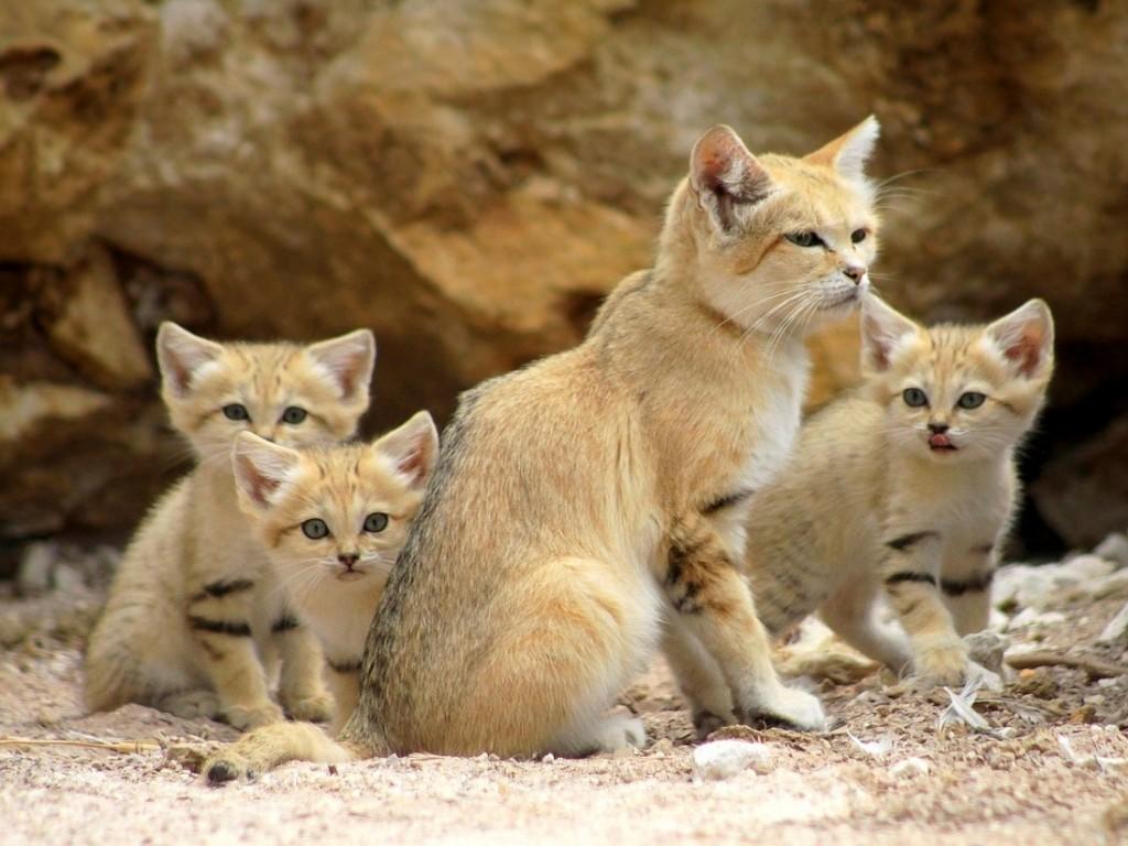 Pahami Jika Kucing Rentan Membawa Penyakit