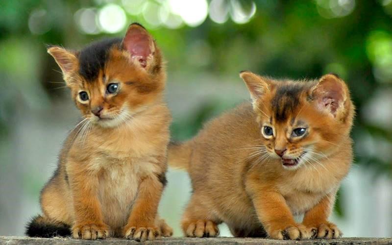 Penyebab Bayi Kucing Sering Mati