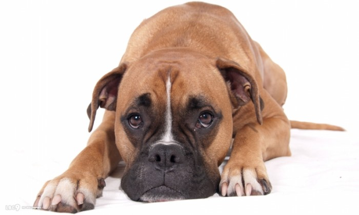 8 Penyebab Diare pada Anjing