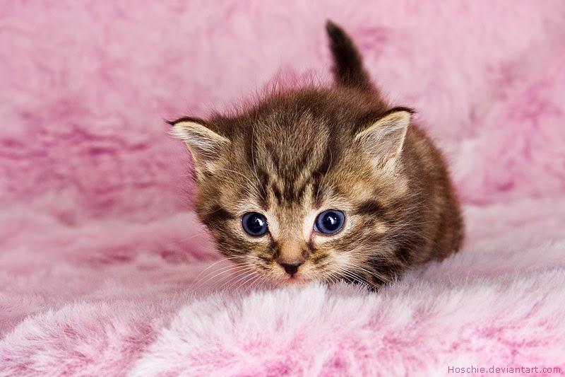 gambar kucing lucu dan imut 15