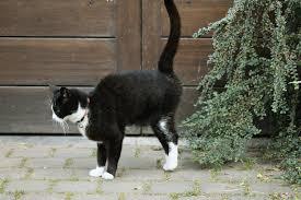 Melatih Kucing Berhenti Tandai Wilayah dengan Urin