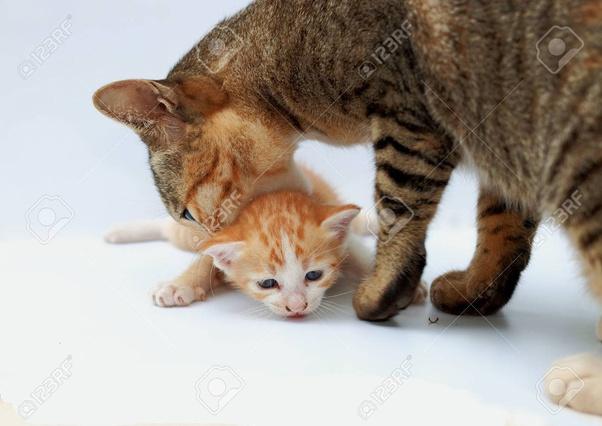 Pemicu Kucing Suka Menggigit Leher Kucing Lain