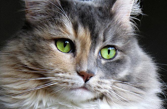 Pahami Perilaku Kucing Setelah Melahirkan