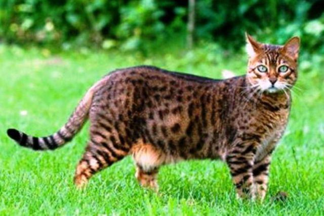 Pilihlah Asal Usul yang Jelas, Jika Ingin Mengawinkan Kucing