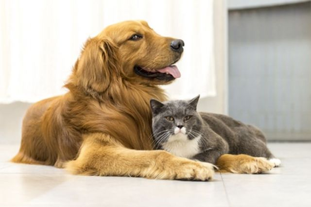Kenali Jenis Vaksin untuk Anjing dan Kucing