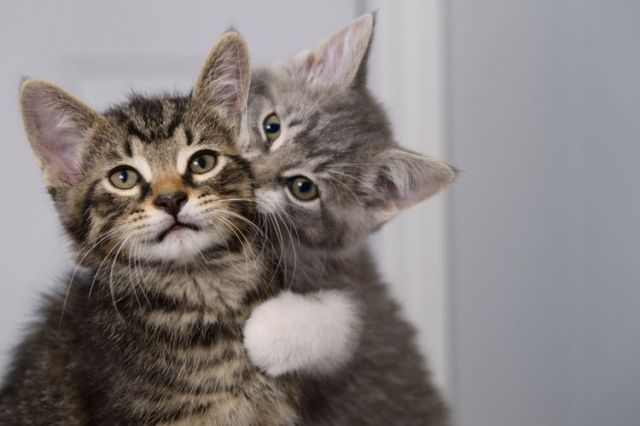 Studi Ungkap Perilaku Kucing Dipengaruhi oleh Pemiliknya