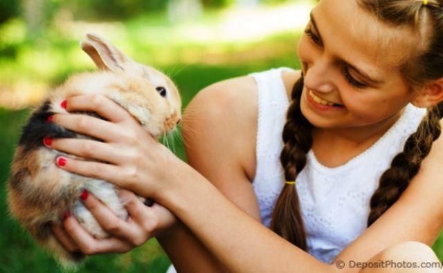 Cara Memegang Hewan Pengerat dengan Aman