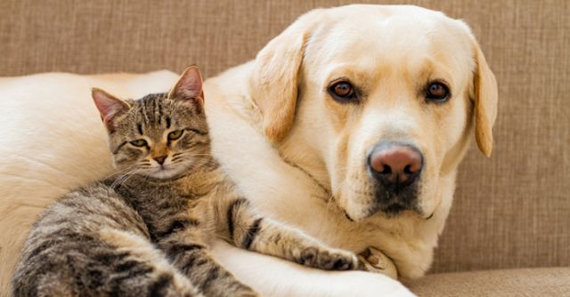 Penyebab Kejang Pada Anjing dan Kucing