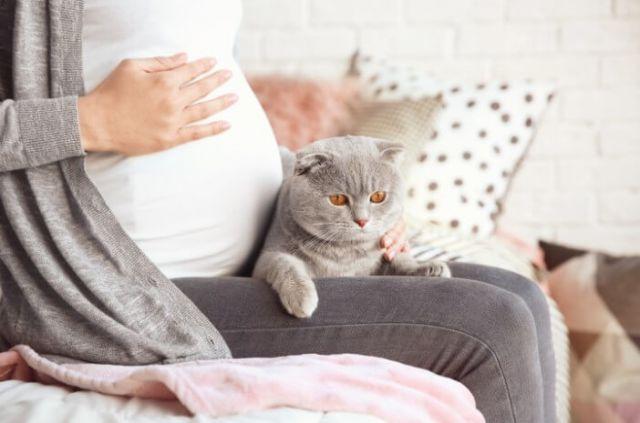 Memelihara Kucing Saat Anda Sedang Hamil