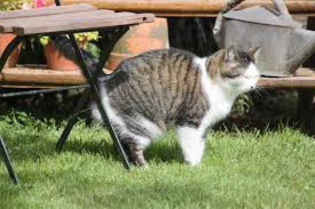 Urine Marking pada Kucing
