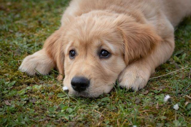 Tanda Anjing Kepanasan dan Cara Mengatasinya