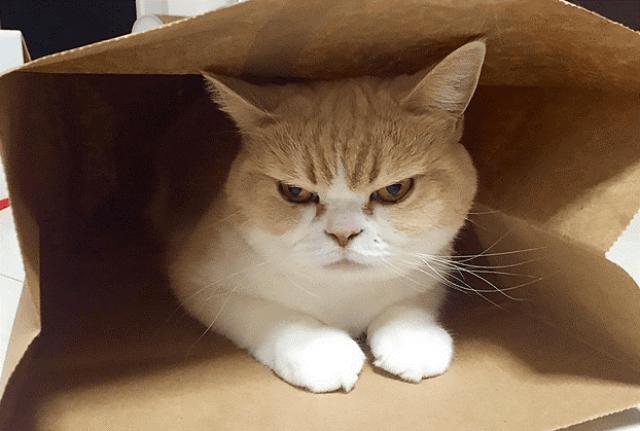 Jika Kucing Anda Galak Saat Dimandikan
