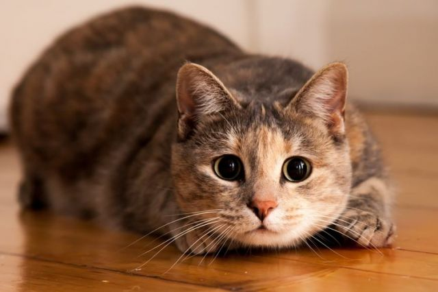 Jangan Keliru, Ini Perbedaan Kucing Jantan dan Betina