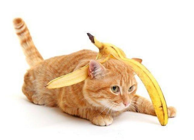 Plus Minus Jika Pisang Diberikan Pada Kucing