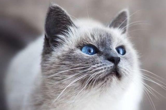 Pahami Urine Marking pada Kucing
