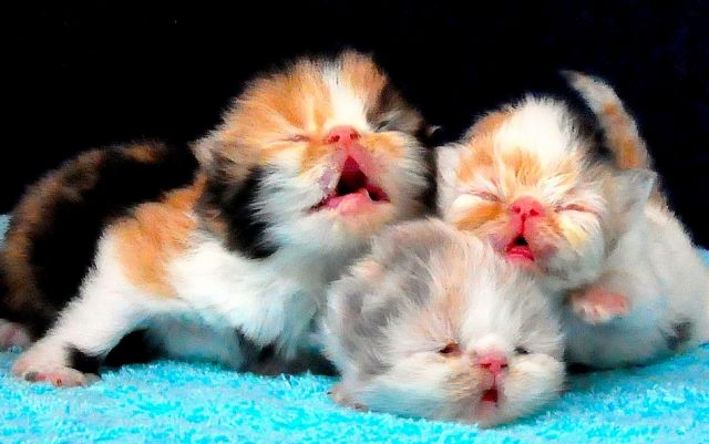 Simak Info ini Sebelum memandikan Kitten