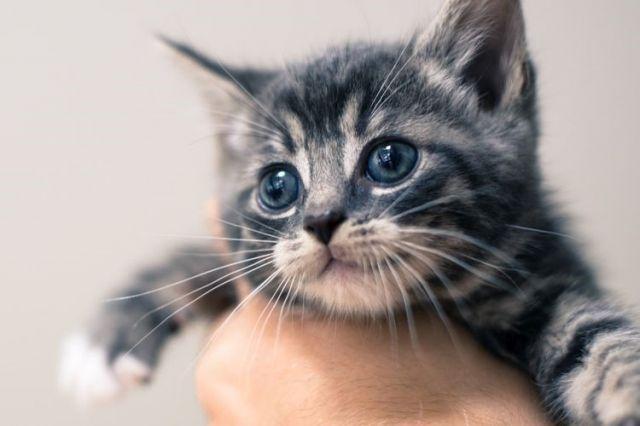 Jangan Memegang Kucing di Bagian Tengkuk