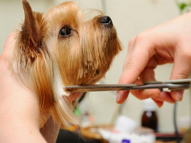 Jangan Sepelekan Grooming Untuk Anjing Kesayangan
