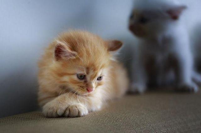 Mengenal Tanda Bayi Kucing Terserang Penyakit