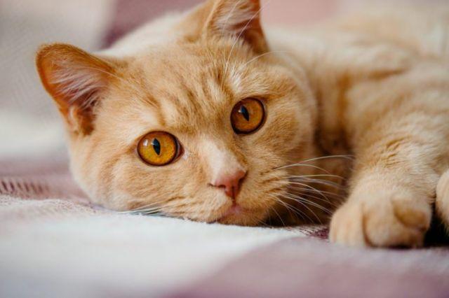 Alasan Kucing Suka Mengendus Benda di Sekitarnya