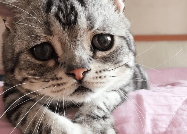 Kucing Mengeluarkan Air Mata, Bukan Karena Menangis