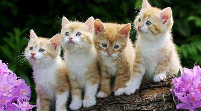 Perhatikan Ini Sebelum Memandikan Kitten