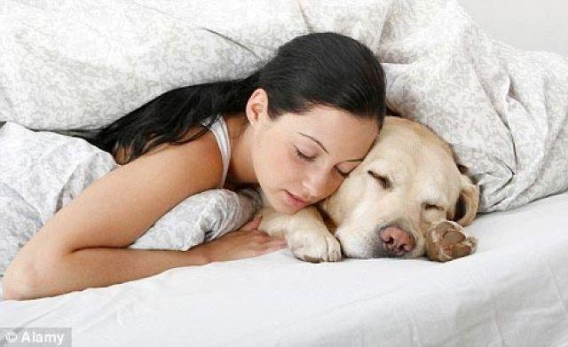 Menimbang Bahaya Tidur Bareng Kucing dan Anjing Peliharaan