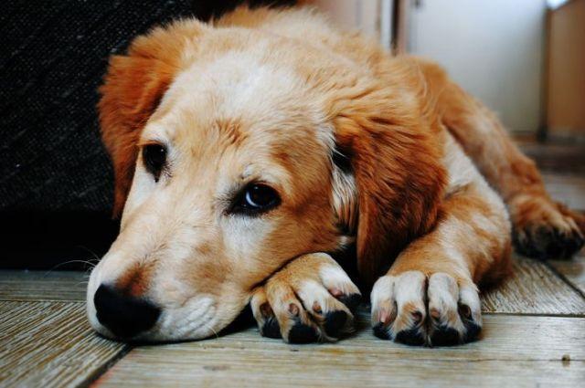 Jika Anjing Anda Alergi Makanan, Ini Tandanya